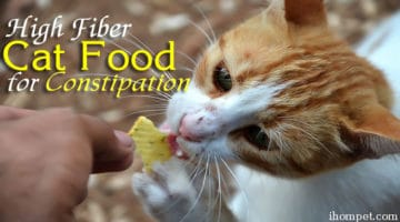 Top 5 High Fiber Cat Food for Constipation