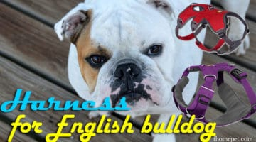 5 of the Best Harness for English bulldog in 2017