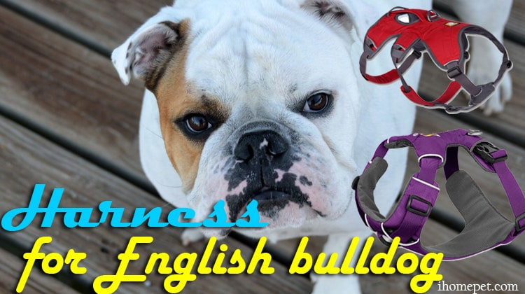 Best Harness for English