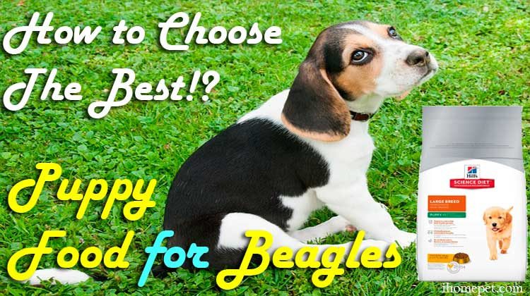 Top 5 Best Puppy Food for Beagles: How to Choose The Best?