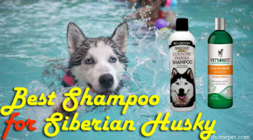 The Best Shampoo For Siberian Husky: Keep Her Sparkling All Day