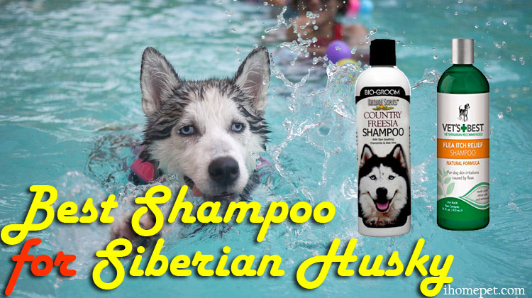 Best Shampoo For Siberian Husky