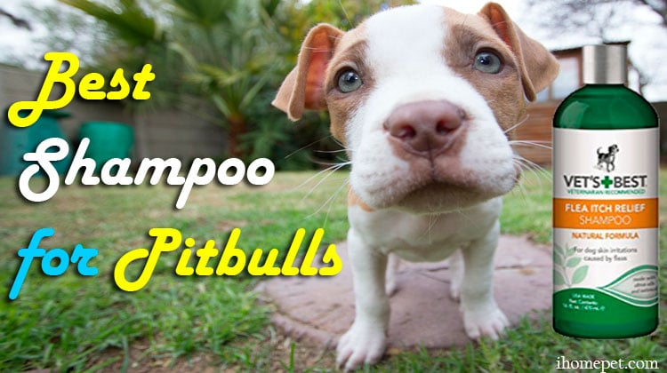 5 of The Best Shampoo For Pitbulls: For A Lustrous Coat