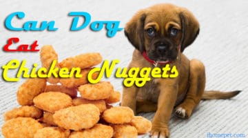 Do you want to know the truth? Can Dogs Eat Chicken Nuggets?