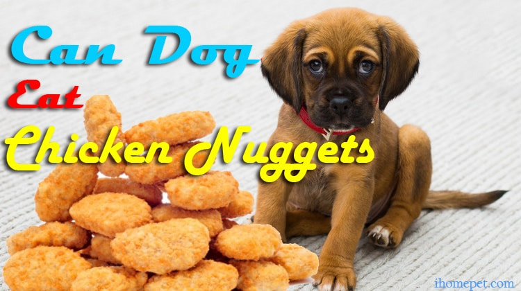 Can Dogs Eat Chicken Nuggets? | Do you want to know the truth?