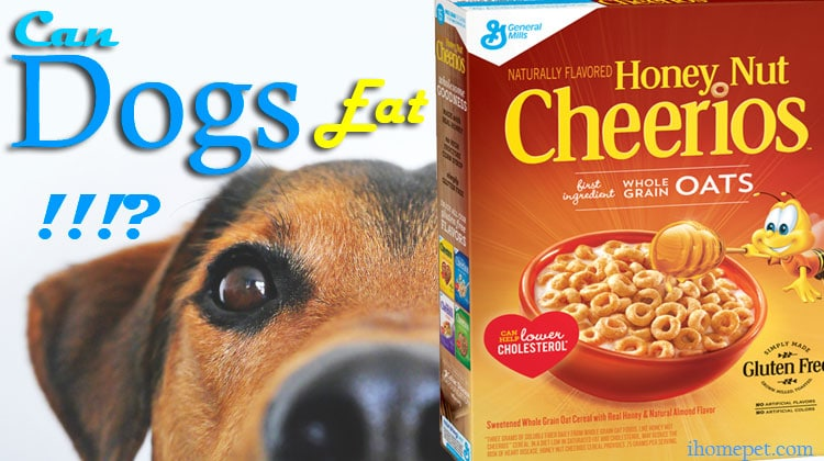 Can Dogs Eat Honey Nut Cheerios