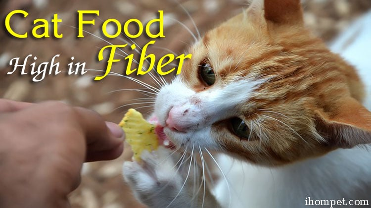Cat Food High in Fiber for the Healthiest Cat