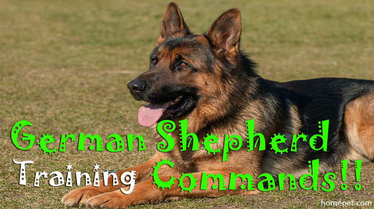 The Basic of German Shepherd Training Commands