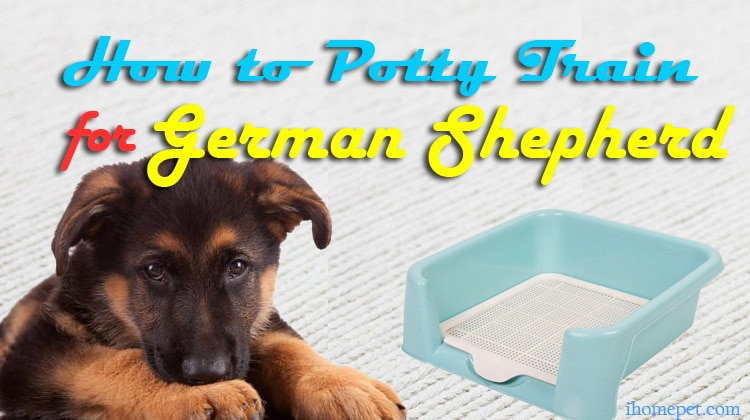 7 Easy Tips on How to Potty Train a German Shepherd
