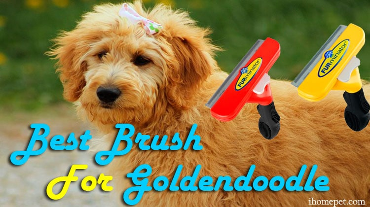 Best Brush for Goldendoodle