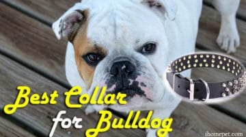 Best Collar for Bulldog(Top 3 Reviews)