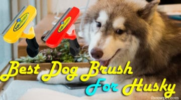 Best Dog Brush For Husky(Get a Beautiful Coat Today!)