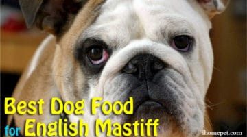 Best Dog Food for English Mastiff: My Top 3 Choices
