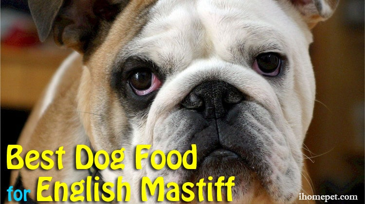 Best Dog Food for English Mastiff