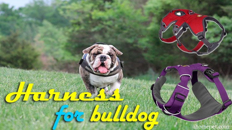 The 5 Best Harnesses For Bulldogs