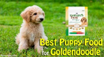 Best Puppy Food for Goldendoodle: TOP 5 Reviews