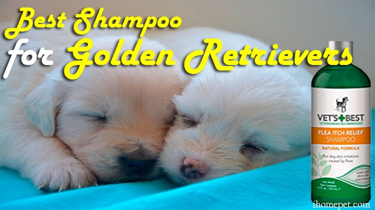 The Best Shampoo For Golden Retrievers You Need to Invest In Today!