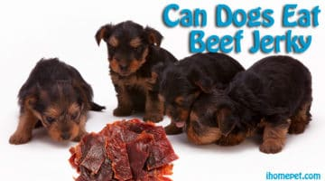 Can Dogs Eat Beef Jerky(You Won't Believe This)