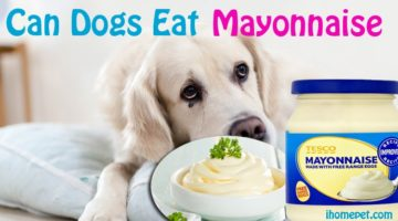Can Dogs Eat Mayonnaise? The Surprising Answers!