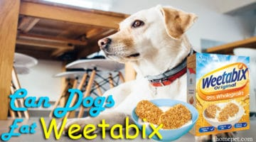 Can I Give A Dog Weetabix