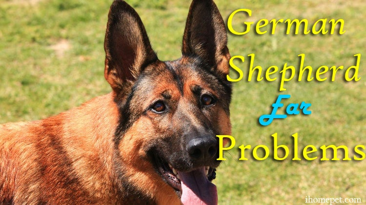 German Shepherd Ear Problems