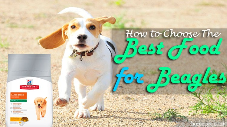 Best Beagle Dog Food? 5 Healthy and Tasty Products!