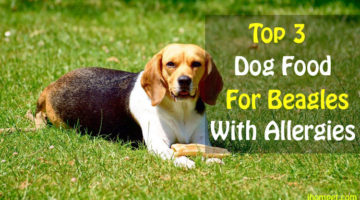 Best Dog Food For Beagles With Allergies(Check These Top 3)