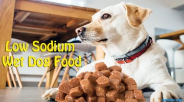 Low Sodium Wet Dog Food(Why Your Dog Needs It)