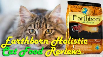 Earthborn Holistic Cat Food Reviews(Top 5)