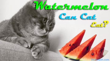 Can cats eat watermelon? Get ready for the shock of your life