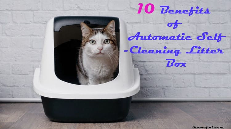 10 Benefits of an Automatic Self-Cleaning Litter Box