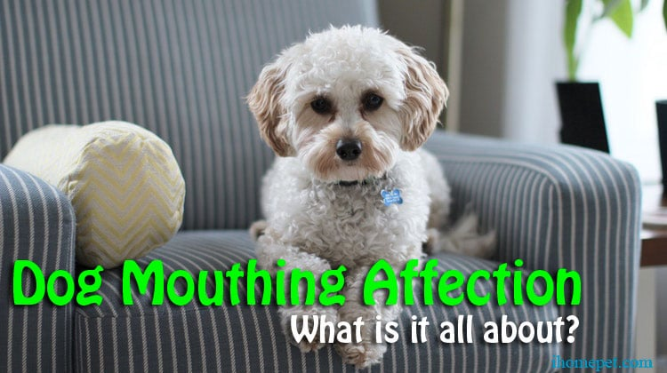 Dog Mouthing Affection: What is it all about?
