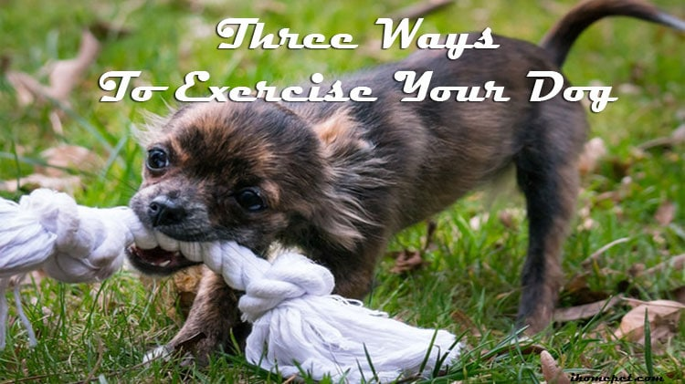 Three Ways To Exercise Your Dog