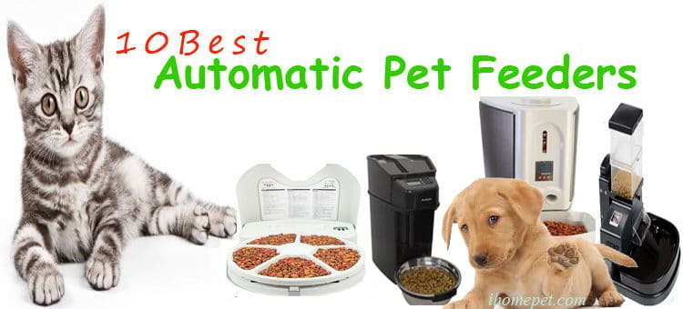 10 Best Automatic Pet Feeder for Dog and Cat 2019