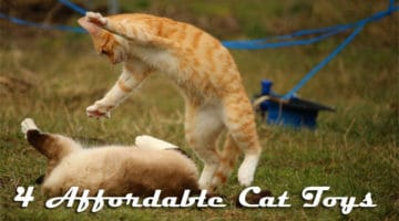 4 Affordable Cat Toys
