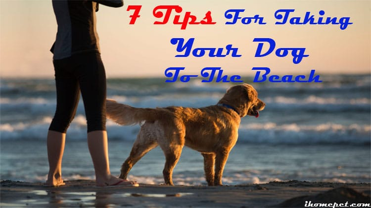 7 Tips For Taking Your Dog To The Beach