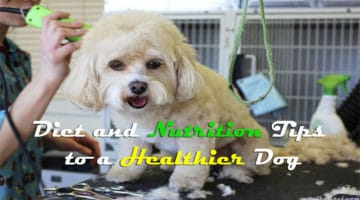 Diet and Nutrition Tips to a Healthier Dog