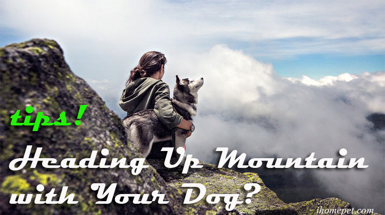 Heading Up a Mountain with Your Dog? Check out these tips!