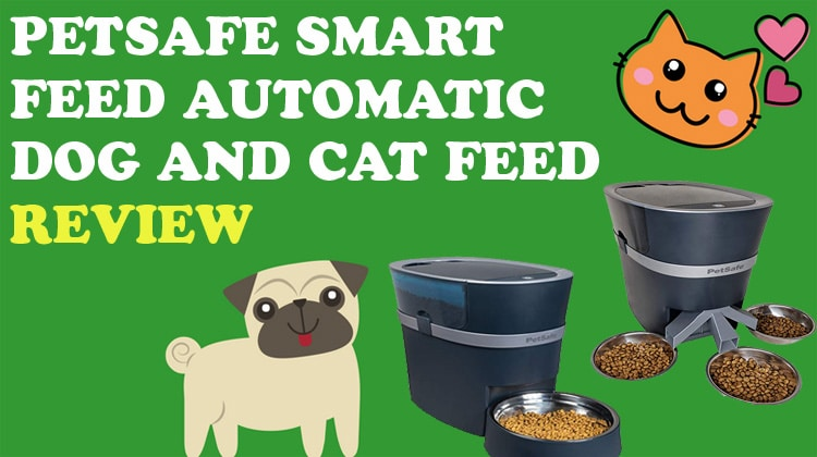 PetSafe Smart Feed Automatic Dog and Cat Feed Review