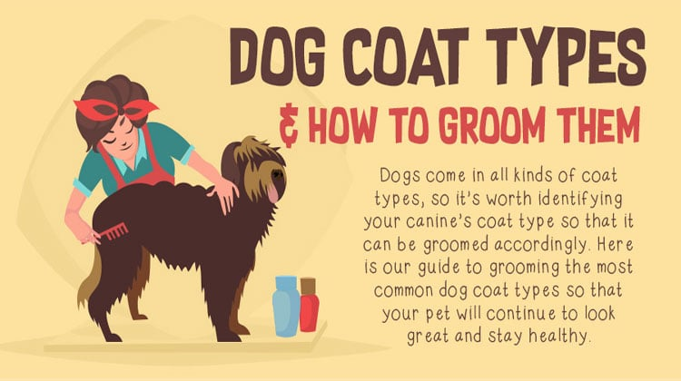 [Infographic] Dog Coat Types & How to Groom Them