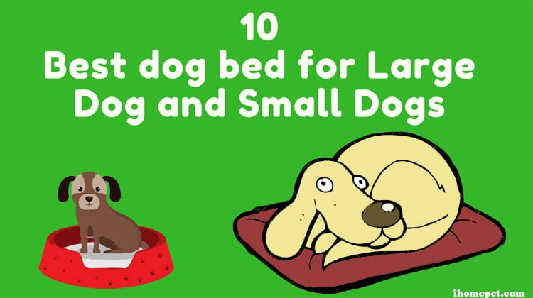 10 Best dog bed for Large Dog and Small Dog 2018