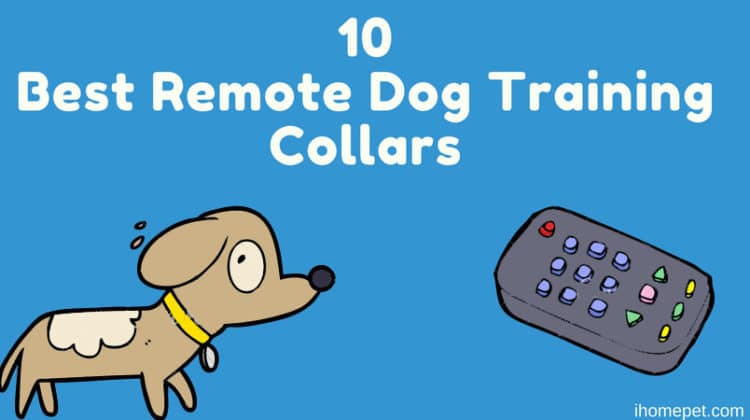 The 10 Best Remote Dog Training Collars