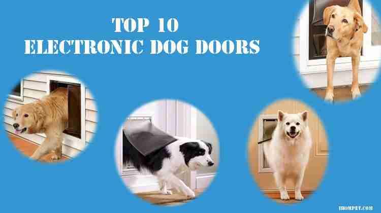 Top 10 Best Electronic Dog Doors 2019