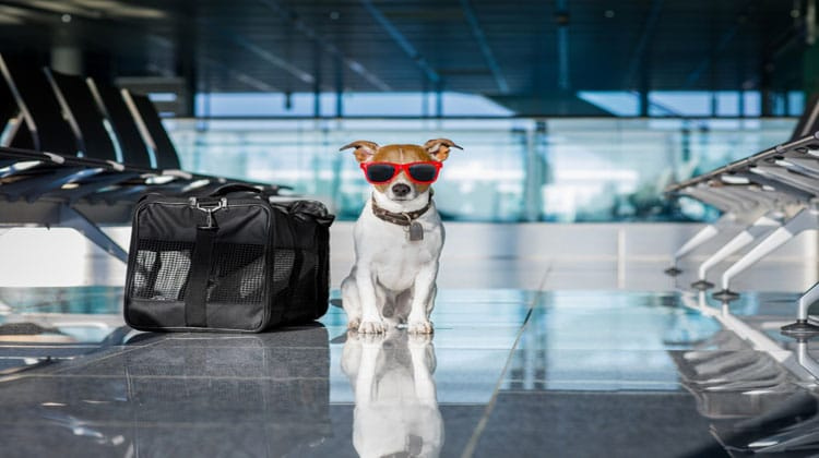 Top 10 Tips for Flying with a Pet