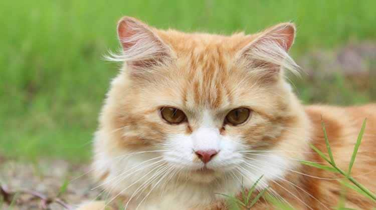 Ten Interesting Feline Facts