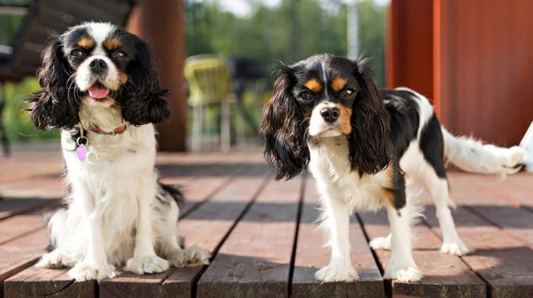 How CBD can help your dog