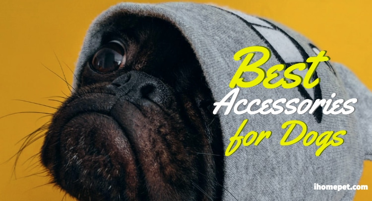 Best Dog Accessories