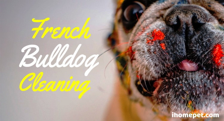 French Bulldog Cleaning: How to keep your french bulldog clean