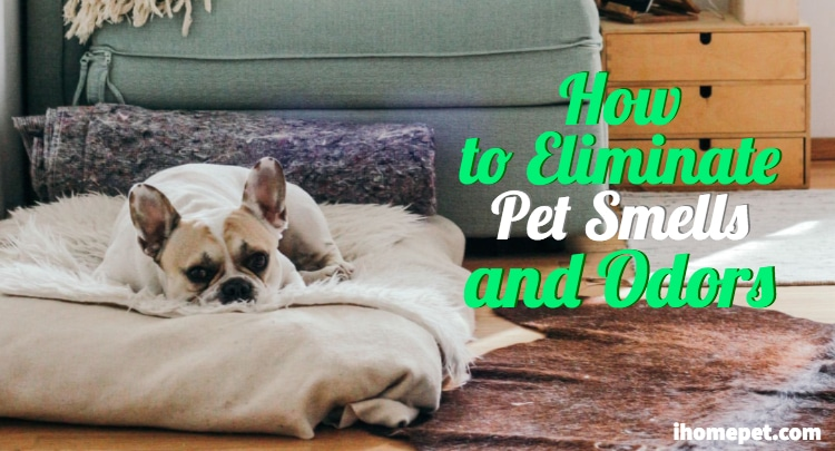 How to eliminate pet smells and dander