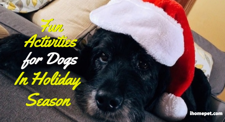 Fun activities for dogs at home
